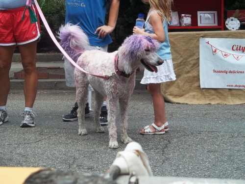 Purple_dog